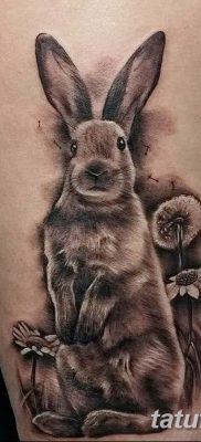 фото тату заяц от 02.09.2017 №030 – tatoos hare – tatufoto.com