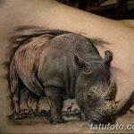 фото тату носорог от 29.09.2017 №026 - rhino tattoo - tatufoto.com