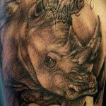 фото тату носорог от 29.09.2017 №039 - rhino tattoo - tatufoto.com