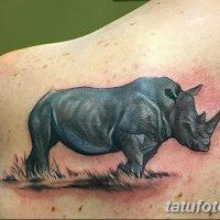 Фото тату носорог