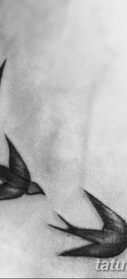 фото тату три ласточки от 24.09.2017 №016 – three swallow tattoos – tatufoto.com