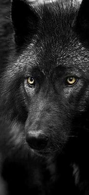 фото тату черный волк от 13.09.2017 №043 – black wolf tattoo – tatufoto.com