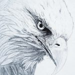 фото Эскизы тату орёл от 21.10.2017 №002 - Sketches of an eagle tattoo - tatufoto.com