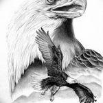 фото Эскизы тату орёл от 21.10.2017 №009 - Sketches of an eagle tattoo - tatufoto.com