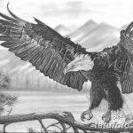 фото Эскизы тату орёл от 21.10.2017 №012 - Sketches of an eagle tattoo - tatufoto.com
