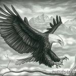 фото Эскизы тату орёл от 21.10.2017 №015 - Sketches of an eagle tattoo - tatufoto.com