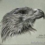 фото Эскизы тату орёл от 21.10.2017 №016 - Sketches of an eagle tattoo - tatufoto.com