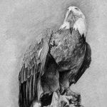 фото Эскизы тату орёл от 21.10.2017 №017 - Sketches of an eagle tattoo - tatufoto.com