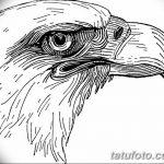 фото Эскизы тату орёл от 21.10.2017 №021 - Sketches of an eagle tattoo - tatufoto.com
