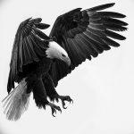 фото Эскизы тату орёл от 21.10.2017 №021 - Sketches of an eagle tattoo - tatufoto.com 2352341532