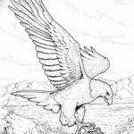 фото Эскизы тату орёл от 21.10.2017 №029 - Sketches of an eagle tattoo - tatufoto.com