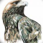 фото Эскизы тату орёл от 21.10.2017 №032 - Sketches of an eagle tattoo - tatufoto.com
