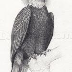 фото Эскизы тату орёл от 21.10.2017 №041 - Sketches of an eagle tattoo - tatufoto.com