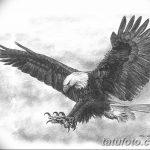 фото Эскизы тату орёл от 21.10.2017 №042 - Sketches of an eagle tattoo - tatufoto.com