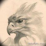 фото Эскизы тату орёл от 21.10.2017 №043 - Sketches of an eagle tattoo - tatufoto.com