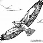 фото Эскизы тату орёл от 21.10.2017 №048 - Sketches of an eagle tattoo - tatufoto.com