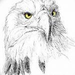 фото Эскизы тату орёл от 21.10.2017 №050 - Sketches of an eagle tattoo - tatufoto.com