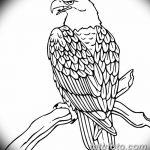 фото Эскизы тату орёл от 21.10.2017 №055 - Sketches of an eagle tattoo - tatufoto.com
