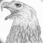 фото Эскизы тату орёл от 21.10.2017 №058 - Sketches of an eagle tattoo - tatufoto.com