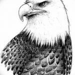 фото Эскизы тату орёл от 21.10.2017 №062 - Sketches of an eagle tattoo - tatufoto.com