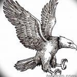 фото Эскизы тату орёл от 21.10.2017 №069 - Sketches of an eagle tattoo - tatufoto.com