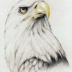 фото Эскизы тату орёл от 21.10.2017 №072 - Sketches of an eagle tattoo - tatufoto.com