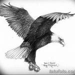фото Эскизы тату орёл от 21.10.2017 №074 - Sketches of an eagle tattoo - tatufoto.com