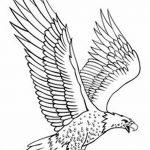 фото Эскизы тату орёл от 21.10.2017 №085 - Sketches of an eagle tattoo - tatufoto.com