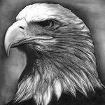 фото Эскизы тату орёл от 21.10.2017 №096 - Sketches of an eagle tattoo - tatufoto.com