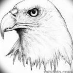 фото Эскизы тату орёл от 21.10.2017 №106 - Sketches of an eagle tattoo - tatufoto.com