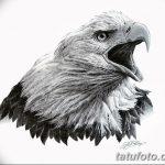 фото Эскизы тату орёл от 21.10.2017 №116 - Sketches of an eagle tattoo - tatufoto.com