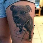 фото тату питбультерьер от 25.10.2017 №003 - tattoo pit bull terrier - tatufoto.com
