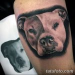 фото тату питбультерьер от 25.10.2017 №004 - tattoo pit bull terrier - tatufoto.com