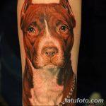 фото тату питбультерьер от 25.10.2017 №005 - tattoo pit bull terrier - tatufoto.com