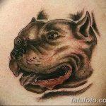 фото тату питбультерьер от 25.10.2017 №008 - tattoo pit bull terrier - tatufoto.com