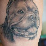фото тату питбультерьер от 25.10.2017 №009 - tattoo pit bull terrier - tatufoto.com