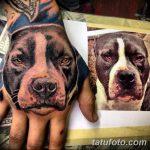 фото тату питбультерьер от 25.10.2017 №013 - tattoo pit bull terrier - tatufoto.com
