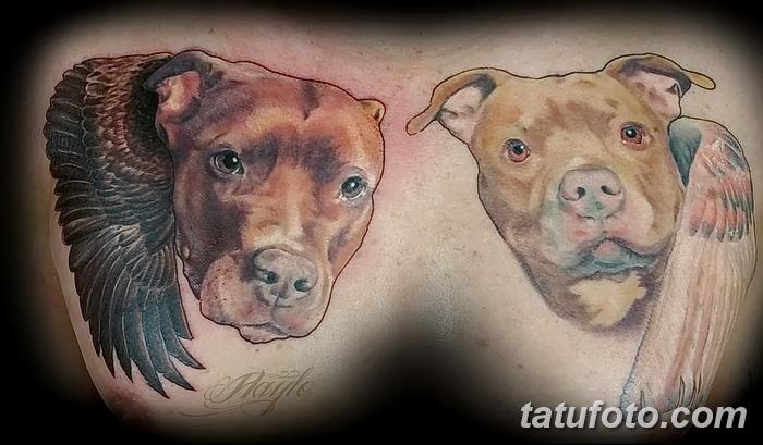 фото тату питбультерьер от 25.10.2017 №015 - tattoo pit bull terrier - tatufoto.com