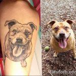 фото тату питбультерьер от 25.10.2017 №017 - tattoo pit bull terrier - tatufoto.com