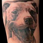 фото тату питбультерьер от 25.10.2017 №020 - tattoo pit bull terrier - tatufoto.com