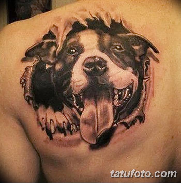фото тату питбультерьер от 25.10.2017 №021 - tattoo pit bull terrier - tatufoto.com