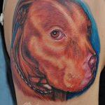 фото тату питбультерьер от 25.10.2017 №022 - tattoo pit bull terrier - tatufoto.com