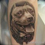фото тату питбультерьер от 25.10.2017 №026 - tattoo pit bull terrier - tatufoto.com
