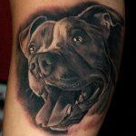 фото тату питбультерьер от 25.10.2017 №027 - tattoo pit bull terrier - tatufoto.com