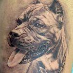 фото тату питбультерьер от 25.10.2017 №028 - tattoo pit bull terrier - tatufoto.com
