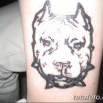 фото тату питбультерьер от 25.10.2017 №030 - tattoo pit bull terrier - tatufoto.com