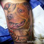 фото тату питбультерьер от 25.10.2017 №031 - tattoo pit bull terrier - tatufoto.com