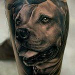фото тату питбультерьер от 25.10.2017 №036 - tattoo pit bull terrier - tatufoto.com
