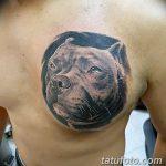 фото тату питбультерьер от 25.10.2017 №037 - tattoo pit bull terrier - tatufoto.com