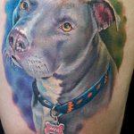 фото тату питбультерьер от 25.10.2017 №038 - tattoo pit bull terrier - tatufoto.com